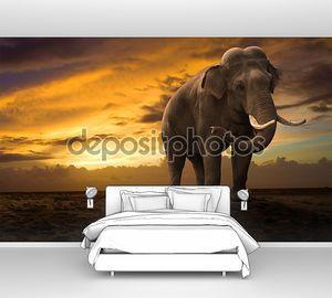 Слон, ходьба открытый на закате