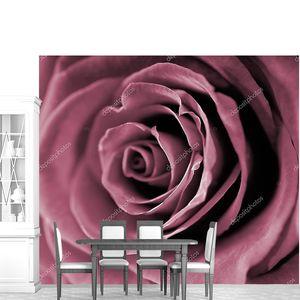 Красные розы крупным планом фото