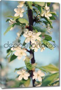 Яблоневый цвет ветка
