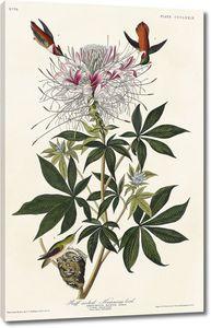 Колибри с ершейкой