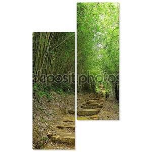 Путь в бамбуковом лесу