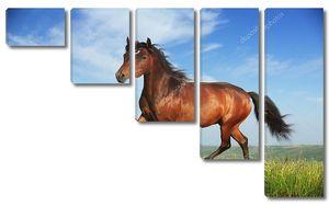 Красивые коричневые лошади работает рысь