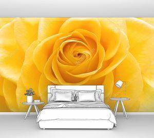 Красивые желтые розы крупным планом