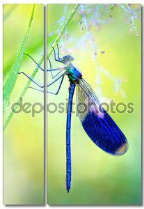 синяя стрекоза