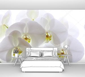 Ветка белой Орхидеи на белом фоне