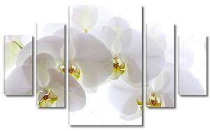 Белая Орхидея на белом фоне