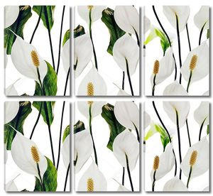 Лилии белые цветы узор на белом