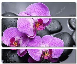 Орхидеи и камни с отражением в каплях воды