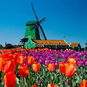 Ветряная мельница в Голландии