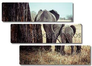 мать и слоненок