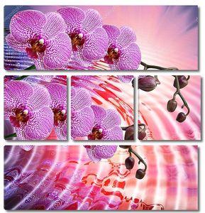Ветки розовой Орхидеи