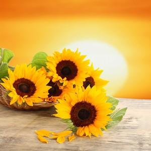 Букет солнечных подсолнухов на деревянном столе