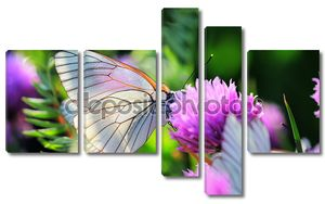 Белая бабочка на зубок чеснока цветы
