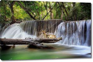 Водопад с оленями