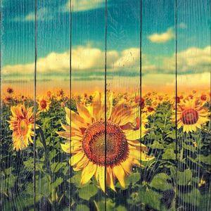 Подсолнухи под голубым небом. Красивая сельская сцена