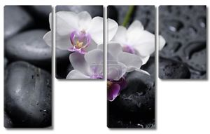 Orchid with  stones