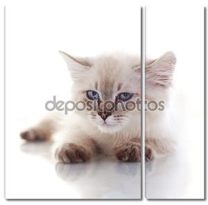 Портрет котенка