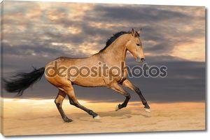 Залив Скачущую Лошадь