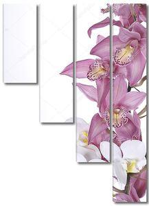 Красивые орхидеи на белом фоне