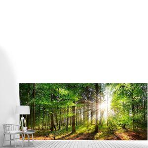 Лучи солнечного света в зеленом лесу