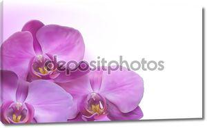 Цветок орхидеи Векторный фон