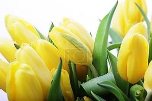 Красивый Букет желтых тюльпанов