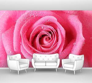 Розовая роза с каплями воды