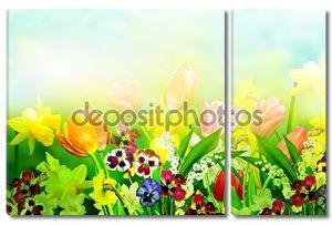 весенние цветочные нарциссы и тюльпаны