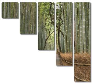 Роща бамбука в Японии