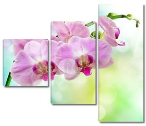 Орхидея крупным кадром