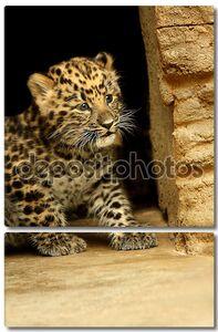 Удивительный ребенок леопард