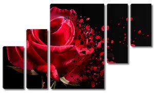 Распадающаяся на лепестки роза