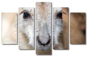 Мордочка кенгуру