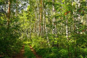 Летний Лесной пейзаж