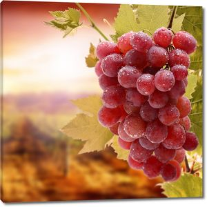 Спелый виноград в каплях воды
