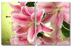 Красивая розовая лилия на зеленом фоне