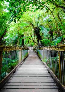 Maits Отдых Тропа тропических лесов в Великий океан дорога, Австралия