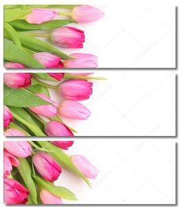 Свежие розовые тюльпаны на белом фоне