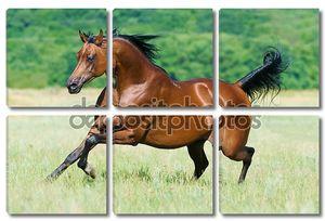 Залив Аравийская лошадь бежит Галоп