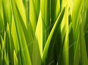 Зеленые листья травы крупно