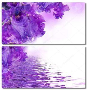 Фиолетовые ирисы против зеленой травы, Лето бабочка