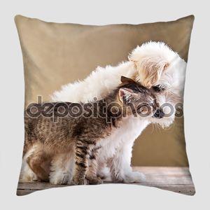 Друзья - собаки и кошки вместе