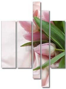 Красивый тюльпан и шелка. С копией пространства