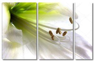Тычинки у лилии
