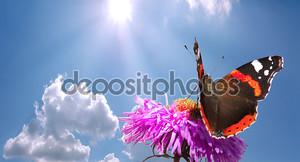 Бабочка на цветке против неба.