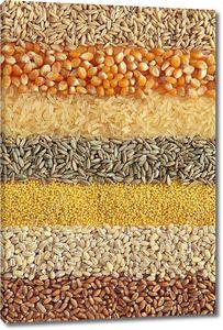 Зерновые - пшеница, ячмень, просо
