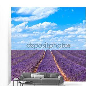 Лаванда цветок цветущие поля горизонт. Валансоль Прованса, ОЛР