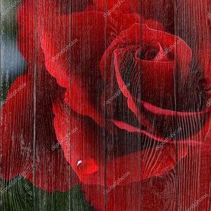 Роза Валентина с слеза