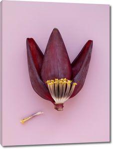Тюльпан в разрезе