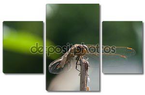 Стрекоза на ветке - макро фотографии